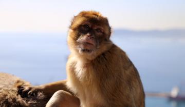 malpka-na-gibraltarze-zakatek-apes-den
