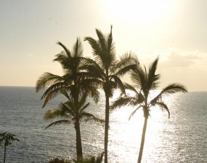 Palmy nad morzem